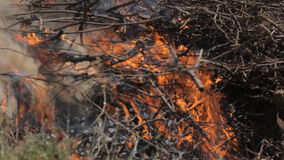 De brandbestrijders doven een brand de steppe stock video