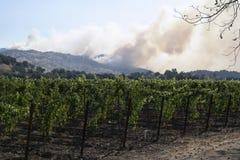 De Branden van de Napavallei Stock Fotografie