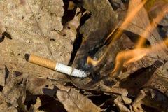 De brandende bladeren van de sigaret Stock Foto's