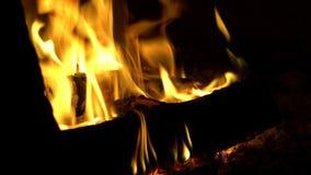 De brandende logboeken zijn in de open haard of de oven stock video