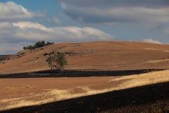 De Brandgangen van de winter drogen Landschap Royalty-vrije Stock Afbeelding
