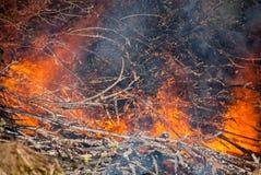 De brandwond van boomtakken stock afbeeldingen