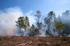 De brandwond van Contolled op een duidelijk bos royalty-vrije stock afbeelding