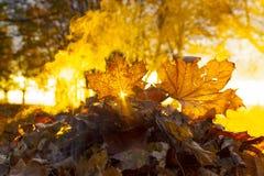 De brandwond van de herfstbladeren stock fotografie
