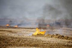 De Brandwond van het prairiestoppelveld royalty-vrije stock foto