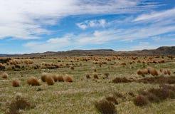 De breda öppna utrymmena av waikatoregionen av Nya Zeeland arkivbild