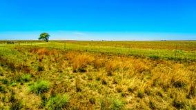 De brede open landbouwgrond langs R39 in het Vaal-Riviergebied van zuidelijke Mpumalanga Stock Foto