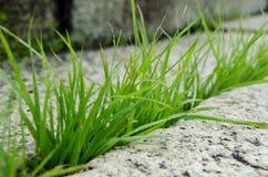 De brekende open steen van het gras Royalty-vrije Stock Afbeelding
