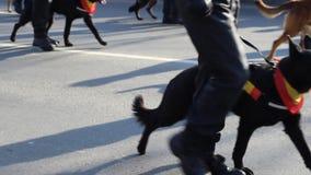De Brigade van de hondpolitie stock videobeelden