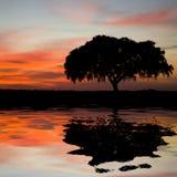 De briljante oranje hemel van het landschap royalty-vrije stock foto's