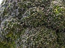De broccoli bij het zijn geheel Stock Afbeelding