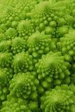 De broccoli van Romanesco Royalty-vrije Stock Afbeelding