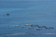 De broedplaats van vissen Royalty-vrije Stock Fotografie