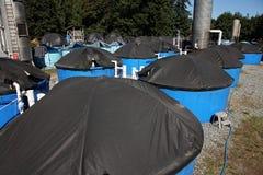 De broedplaats van zalmvissen royalty-vrije stock fotografie