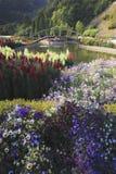 De Brug met kleurrijke bloemen die in het onduidelijke beeld van de windmotie blazen Stock Foto's