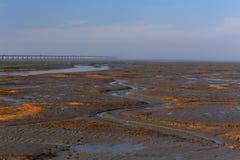 De brug op het moerasland Royalty-vrije Stock Foto's