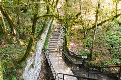 De brug over de tectonische fout op het grondgebied van het taxushout & bukshoutbosje Royalty-vrije Stock Foto