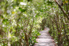 De brug van aardslepen in de tunnel van de mangroveboom Royalty-vrije Stock Fotografie
