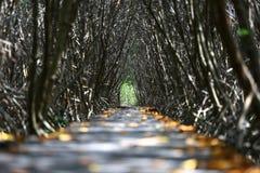 De brug van aardslepen in de tunnel van de mangroveboom Stock Fotografie