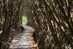 De brug van aardslepen in de tunnel van de mangroveboom Royalty-vrije Stock Afbeeldingen