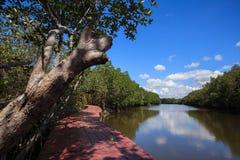 De brug van aardslepen in Mangrovebos met blauwe hemel Stock Afbeelding