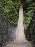 De brug van de kabel in de bomen Stock Foto