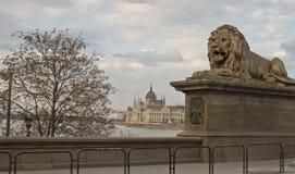 De Brug van de ketting, Boedapest Stock Fotografie
