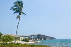 De brug van de Sleutels van Florida met palm Stock Afbeelding