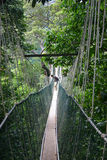 De brug van de wilderniskabel Stock Foto's