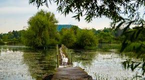 De brug van het zwaanmeer Royalty-vrije Stock Foto