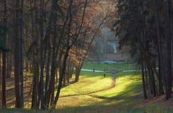 De bruggen van de voet en grasrijk perceel in de herfstpark Stock Afbeeldingen