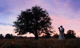 De bruid en de bruidegom bevinden zich naast een grote boom, na de huwelijksceremonie Silhouetfoto in warme kleuren Stock Afbeelding