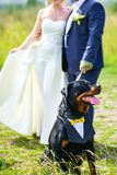De bruid en de bruidegom trekken de Rottweiler-hond op een leiband in de zomer op een groene open plek royalty-vrije stock afbeeldingen