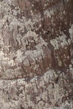De bruine achtergrond van de grunge houten textuur Stock Foto