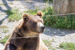 De bruine beer zit in de dierentuin Stock Foto