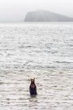 De bruine beervissen Stock Foto's