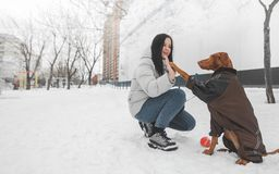 De bruine hond die een kleding en een gelukkige meisjeszitting in de sneeuw in de winter dragen en, de hond geeft de vijf eigenaa royalty-vrije stock foto