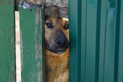 De bruine hond kijkt uit de groef van de omheining royalty-vrije stock afbeeldingen