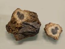 De bruine Langsligger is een duidelijk aan geelachtig aan blauw mineraal dat voor het maken van halfedelstenen zeer zacht en niet stock afbeeldingen