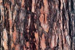 De bruine schors op de boomstam van pijnboom stock foto's