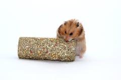 De bruine Syrische hamster knaagt aan de tunnel van gras Stock Foto