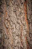 De bruine textuur van de boomschors royalty-vrije stock foto