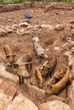 De bruine varkens in ommuurde steen drijven bijeen Stock Afbeelding
