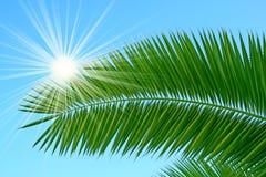 De brunch van de palm stock afbeelding