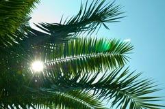 De brunch van de palm met hemel Stock Foto's