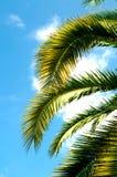 De brunch van de palm met hemel Stock Afbeelding