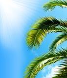 De brunch van de palm met hemel Stock Afbeeldingen