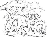 De buffels gingen voor een gang stock foto's