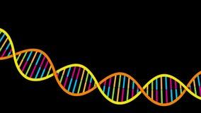 De bundel van DNA stock video
