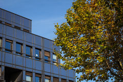 De bureaubouw en de herfstboom Stock Afbeelding